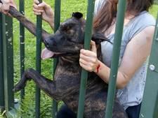 Eigenaar pitbull die Lyana (7) beet voor de rechter