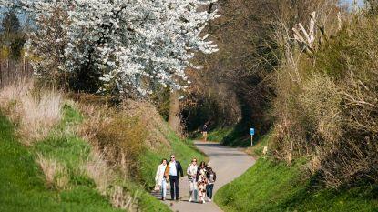 Genieten van de eerste bloesems: vijfduizend toeristen vinden vlotjes de weg naar Sint-Truiden