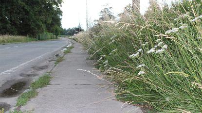 Veiligheidsmaaien langs de fietspaden niet goedgekeurd op gemeenteraad
