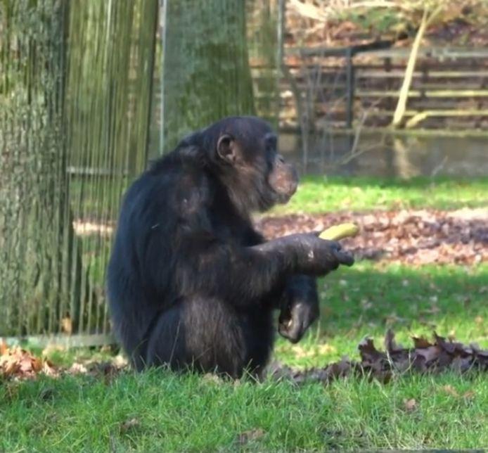 Een aap met de banaan