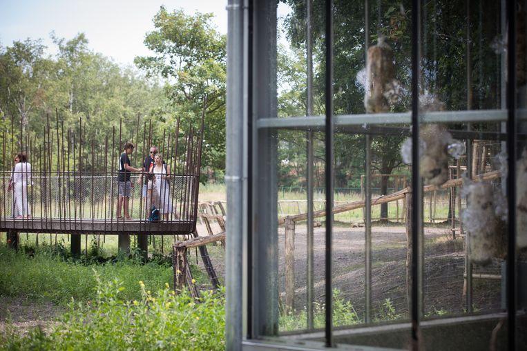 LABIOMISTA van Koen Vanmechelen in de voormalige zoo van Zwartberg