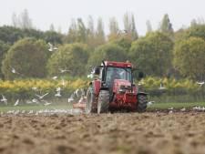 Boeren in de Betuwe zijn voor even 'Rattenvanger van Hamelen'