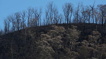 """Australische premier: """"Verwijderen brandbare vegetatie even belangrijk als terugbrengen uitstoot"""""""