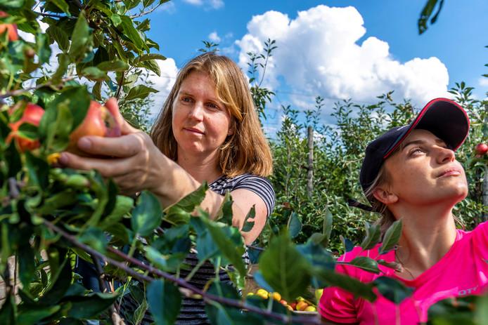 Boerin Djuke Smith- van der Maat is bezig met de voorbereidingen van de drukbezochte 'Plukdagen' van afgelopen weekend.