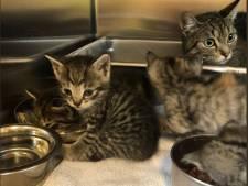 Moederpoes en zes kittens gedumpt bij tankstation