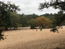 Door het zand rollen of met mini voertuigen over de boomwortels racen: Bedafse Bergen zijn in trek