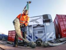 Stoffelijke resten van Duitse oorlogspiloot in vliegtuigwrak bij Hoonhorst gevonden