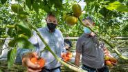 Minister-president Jambon bezoekt Putse tomatenkwekerij