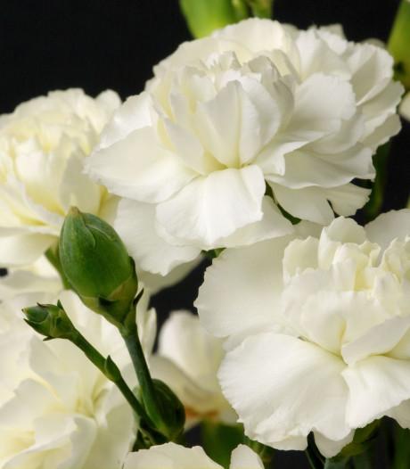 Bloemen uit kenia