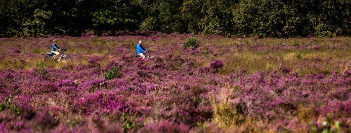 De natuur op de Veluwe is zeer gevoelig voor de neerslag van stikstof en ligt ook nog eens midden in een provincie met veel intensieve veehouderij.