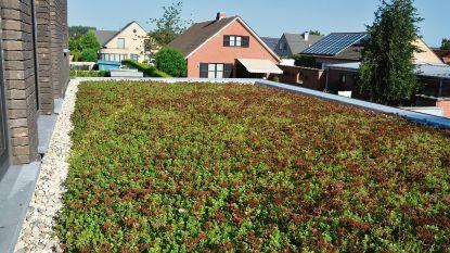 Een groene toekomst voor jouw dak