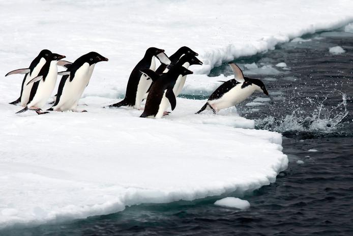 Antarctica is de thuishaven van veel pinguïns.
