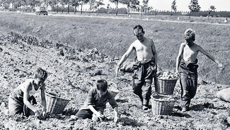 null Beeld Schoolroosters gaan er nog steeds van uit dat kinderen in de zomer meehelpen op het land.