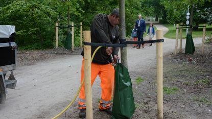 """Pilootproject met waterzakken voor jonge bomen: """"Bij droogte telt elke druppel"""""""