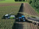 Ondanks droge zomer is de Betuwse mais nog heel behoorlijke mais
