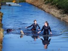 Happy Dog Survival-wedstrijd in Werkendam: 'De vertrouwensband met je hond is heel belangrijk'