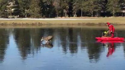 Man in rood pak en met slee redt bambi die zich op glad ijs waagt