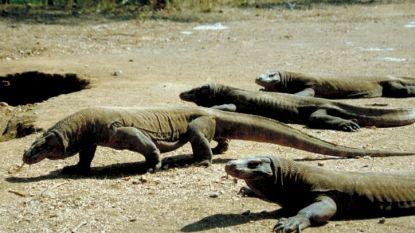 """Indonesië doet """"drakeneiland"""" Komodo jaar lang op slot"""
