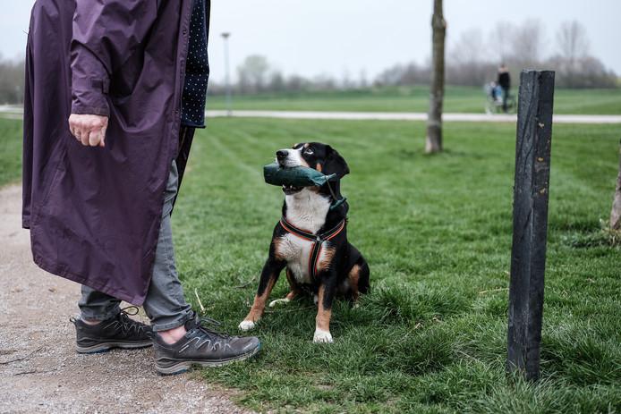 Honden in het Horsterpark , een Entlebucher met baasje