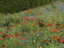 Gestel wil duizenden bloemen laten bloeien in 2021