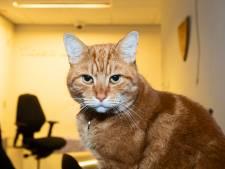 Sunny heeft een nieuw baasje, maar hij blijft de stationskat van Deventer