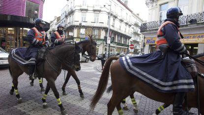 Waregem Koerse: voor het eerst 9 politiepaarden