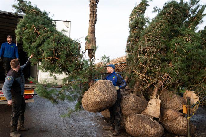 Een van de laatste vrachten met bomen wordt bij Gelderplant Export BV in Opheusden klaargemaakt.
