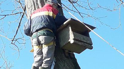 Klein-Brabantse torenvalken krijgen nieuwe nestkasten