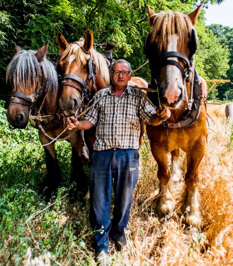 Belgische paarden verdienen hun eigen haver op Kaatsheuvelse akker