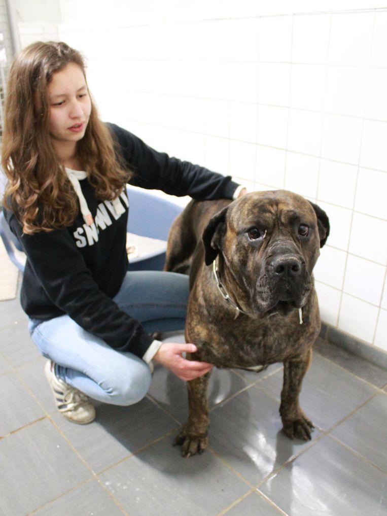 Manu Peremans van dierenopvangcentrum Leiestreek in Zwevegem, dat tien honden en vier katten opvangt.