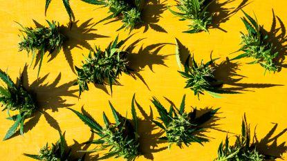 Dertigers riskeren tot 20 maanden cel voor maandenlange verkoop cannabis