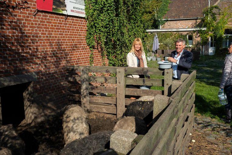 Filip De Winter en Anke Van dermeersch geven de varkens eten, die volgens hen ongeschikt