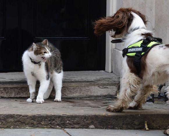 Zowel katten en honden kwispelen, maar ze bedoelen er iets