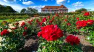 """Vernieuwde helft Rozentuin Rivierenhof opnieuw open: """"We hebben alles duurzaam ingericht, en verrassend fleurig aangeplant"""""""