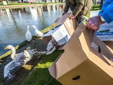 Actiecomité zet ongewenste ganzen terug in dorp