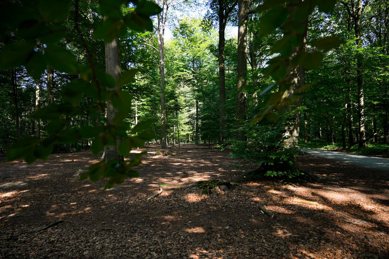 Natuurpunt Houtem trekt het bos in voor een wandeling.