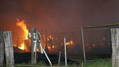 Pyromaan brandt caravans en duiventil plat in Herentals