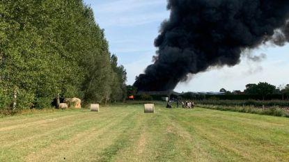 Boomkwekerij in lichterlaaie: rookpluim kilometers ver te zien