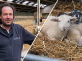 De lente komt er aan: geboortegolf op de schapenboerderij