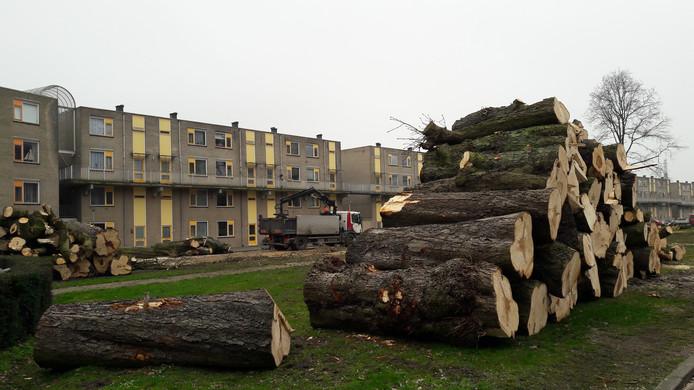 In 2019 zijn 66 oude, zieke kastanjebomen gerooid aan de Rijtuigweg.