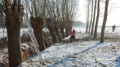 Vrijwilligers knotten gratis bomen in ruil voor brandhout