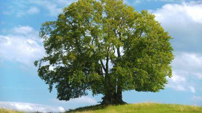 """Bioloog over klimaatverandering: """"We moeten bomen planten die bestand zijn tegen hitte"""""""
