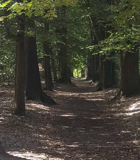 Staatsbosbeheer sluit 'laantje met Mariabeeldje' in Springendal af voor veiligheid én natuur