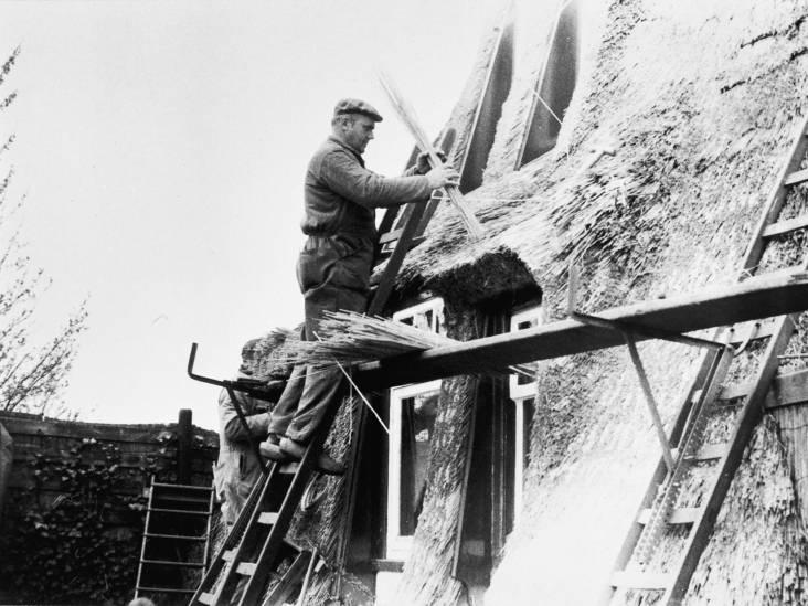 Na 130 jaar staat de vijfde generatie aan het roer bij rietdekkersbedrijf Van Ooi
