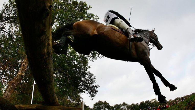 Paard Jaipur (niet het paard op de foto) springt niet zo hoog meer Beeld anp