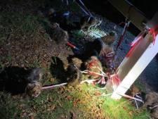 16 (!) zwaar verwaarloosde honden aangetroffen langs de weg: 'Ze zaten onder de ontlasting'