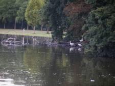 Vermoeden van botulisme in Warandevijver Helmond