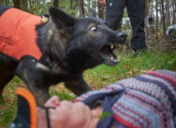Een training in de bossen van De Mortel met hond Nessy.