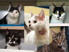 Vijf katten gedumpt in mandjes: 'Dit is dieronwaardig'