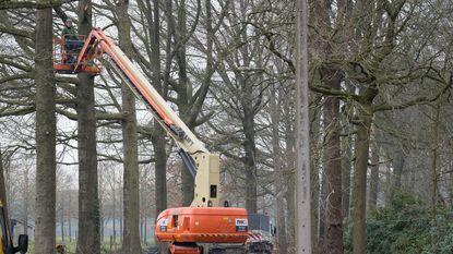 Tien bomen in Rameyendreef worden geveld